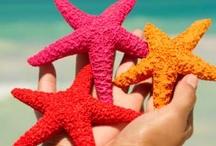 Starfish & Jellyfish