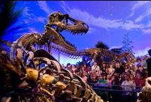 Attractions Industry / Images and news from  museums,  theme parks, FECs,  zoos,  aquariums,  gardens, waterparks and other attractions around the world. Please pin your favourites! :D If you are an attraction and would like an invite to pin please mail us at pinterest@blooloop.com