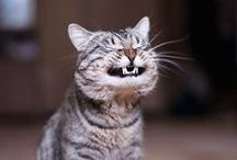 Crazy Cats! / All the cute and fun cats!