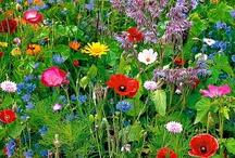 Flowers/plants / by Jacquelien K.