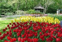 Paisagismo como Arte / Flores, plantas e jardins. Matérias e fichas técnicas para os amantes de Paisagismo e Jardinagem