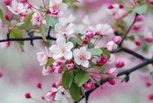 Kevät / Elämä puhkeaa... <3
