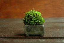 I like it! / Da ich selbst Akzentschalen herstelle, habe ich hier eine Auswahl an Pflanzen-/Schalenkombinationen gepinnt, die mir gefallen.