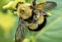 Bees ღ Bugs & Butterfly Ƹ̵̡Ӝ̵̨̄Ʒ / Bee, bugs, butterflies... beauty is in the eye of the beholder / by Lady Hawke