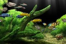 Aquariums / by Fernando Borges