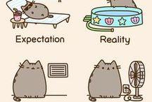 Expectasion vs Reality