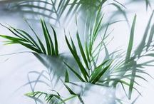 PLANT 식물 판타지
