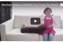 DIY Dog (and Cat!) / Homemade houses, fresh baked biscuits, tantalizing toys and  fun games for felines / by CANIDAE Pet Foods