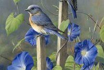 BIRDS / by Susan Hutchings