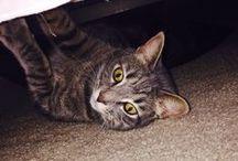 Cat Lady Fo Life / by Shylee Davis