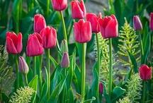 Garden. / Beauty in Gardens