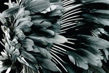   Feathers & Wings   / by inconde
