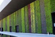 *vertical garden*