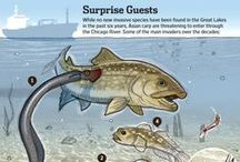 Invasive Species / A look at the invasive species that threaten native wildlife, forests and waters.