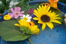 Veg Garden Fun / Fun things at community gardens around Denver, Colorado.