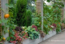 """Vertical Vegetable Gardening / Vertical vegetable gardening maximizes space and invites creativity. From worn-out stuff to custom-built masterpieces, almost anything can serve as trellis for """"growing up"""". (Not that I would know anything about that...)"""