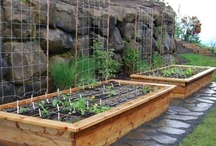 Raised Bed Veggie Gardens / Framed raised bed vegetable gardens come in a zillion building styles. Here is a gallery of options to inspire you in building your own.