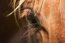 HORSES AND HOOVES / Horse are monumental