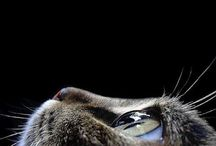 CUTE CATS / ADMIRATION FOR CATS