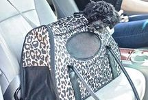 Pet Carriers / Stylish pet carriers from Gen7Pets to keep your pets happy and comfortable on the go!