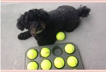 Playful Pups / Fun games and DIYs to keep your playful pup happy and active.