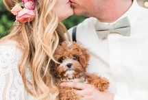 "The ""Big"" Day! / It's your wedding day! Here are some ways couples included their fur children on their ""BIG"" day!"