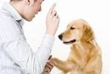 Pet Training Tips / We could all use a few tips on training our pets!