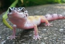 Loveable Lizards / Lizards have so much personality!