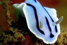 Sea slugs and other incredible creatures