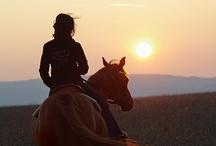 Equine Beauty