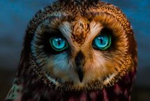 With Owls / They are even more then what they seem ... / by Erik Ingmanndsen