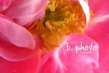Ethereal Flowers / Beautiful flowers often with lovely editing  / by Erik Ingmanndsen