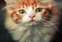 Cat, cat, cat!