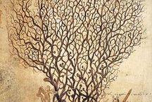 Antique Nature Illustrations