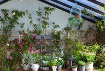 Urban jungle / Flores y plantas. Cómo incluirlas en la decoración, cómo nos inspiran, cómo destacarlas en una imagen.