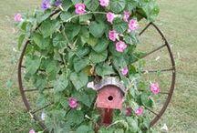 Garden & Ideas