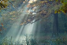 Gentle Beams of Light / by Pat Christopherson