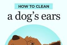 Dog Care / Feel free to pin useful dog care tips to this board.  Please only pin or repin images that are related to dog care so that followers of this board will not see unrelated pins.
