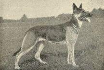 Old dog photos