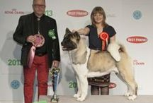 Dog Shows: Best In Group & Best In Show (Finland) / Best In Group (BIG) & Best In Show (BIS) dogs from finnish dog shows.