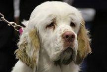 Dogs: Dog Breeds / Different dog breeds