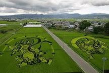 Japan - Rice field art / Japanese Rice Murals are a part of a Japanese tradition in two farming towns, Inakadate and Yonezawa, Japan.  The paddy art in Inakadate, for example, spans 15,000 square meters and can only be seen from the air or atop a tower in the local castle.  This art has been celebrated in Japan, capturing the curiosity of the local spirit and making their labor — the raising of rice — an art in and of itself / by Isobel H