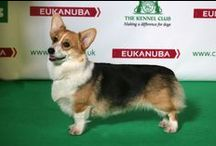 Dog Shows: Crufts 2014 - Best Of Breeds