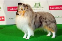 Dog Shows: Crufts 2013 - Best Of Breeds