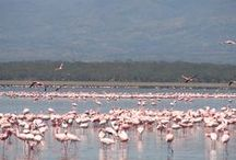 Nakuru Clients Forum / Nakuru town in Kenya. A town in the Great Rift Valley and home to thousands of the pink flamingoes. It is also home of Valuemax Consulting. We treasure our clients based in Nakuru.