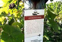 TdV | Pfalz / Taccuini di Viaggio Armillaria visita la regione vitivinicola dello Pfalz