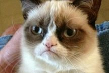 Grumpy Cat / by Audrey Ashcraft