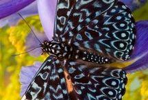 { butterfly flutter by }