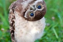 Owls / Visit our live owl cameras at explore.org/owls