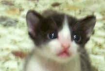 Animals for Adoption / Για υιοθεσια!